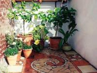 Размещение растений в подвесных ящиках и напольных горшках
