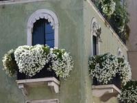 Оформление балкона ампельными цветами